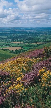 Clwydian Range Moorland