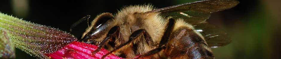 bee-banner5